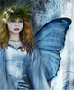 Blue Winged Fairy