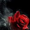 rose in smoke