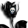 Black rose and skull